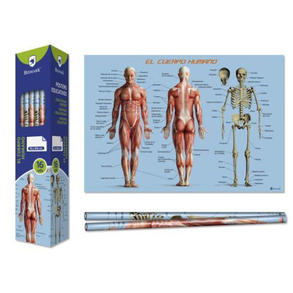 poes328695-poster-cuerpo-humano-70x