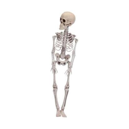 koop491102980-figura-esqueleto-hall